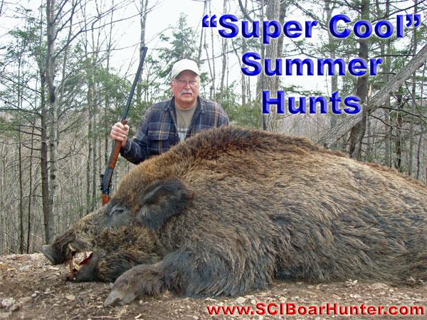 Genuine Boars  Summer Hunts