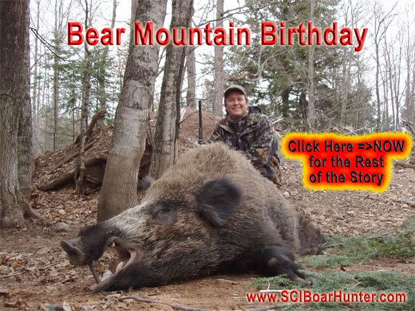 Hunt Russian Boar in the Great Northern Forest – USA